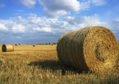 droit patrimoine agricole